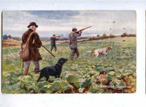 182918 Hunting partridge dog by Drummond Vintage postcard