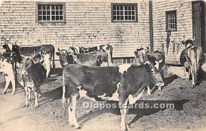 Old Vintage Shaker Post Card A Herd of Guernsey Cows, East Canterbury, New Ha...