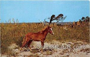 Wild Outer Banks Pony Ocracoke Island, North Carolina Unused