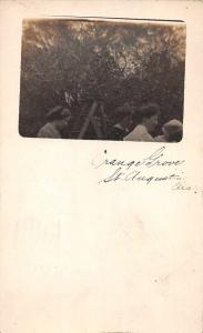 St Augustine Florida Orange Grove Real Photo Vintage Postcard JC932019