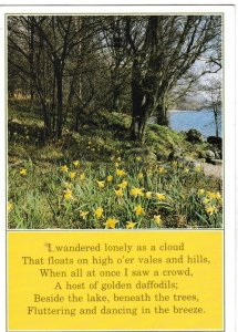 Postcard flowers / poetry Wordsworth's Daffodils