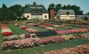 ST. CATHARINES, Ontario, 1950-60s ; Stokes Seed Farms