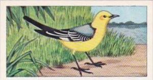 Glengettie Tea Trade Card Rare British Birds No 11 Citrine Wagtail