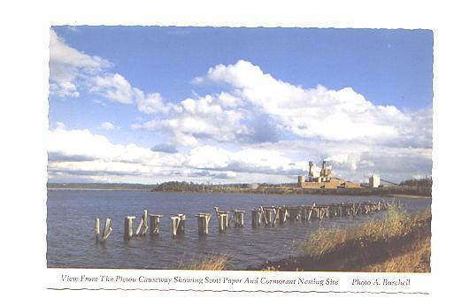 Scott Paper,  Pictou Causeway, Nova Scotia, Cormorant Nesting Site,