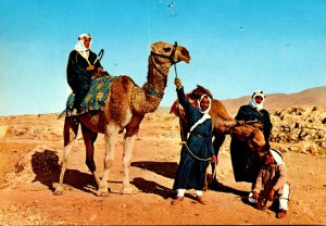 Israel Chameliers Camel Drivers