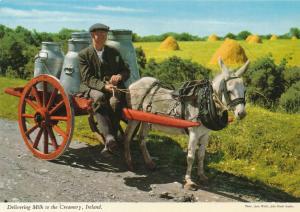 Delivering Milk to the Creamery - Ireland