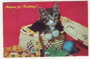 P445 JLs postcard 1967 a kitten anyone for knitting sewing basket