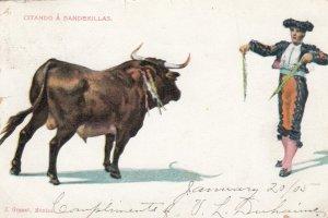 Bull Fighting ; Citando a Banderillas , 1905