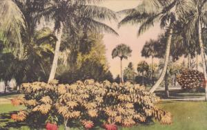 FLORIDA, Poinsettias in Bloom, Palm Trees, 00-10s