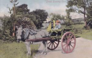 Irish Donkey Cart Antique Ireland Postcard