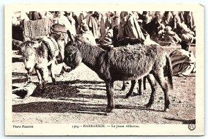 VTG Postcard Maroc Morocco Marrakech Donkey Burro Jackass Animal Market A4