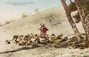 Japan Nara Wakakusayama Hill