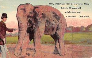 Elephant Post Card Babe, Walbridge Park Zoo Toledo, Ohio, USA Unused