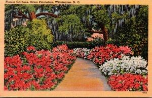 North Carolina Wilmington Flower Gardens At Orton Plantation