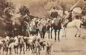 1910 Hunting Postcard: Haldon Harriers at Cockington (Devonshire, England)