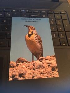 Vintage Postcard: Wonderful Wyoming Meadowlark