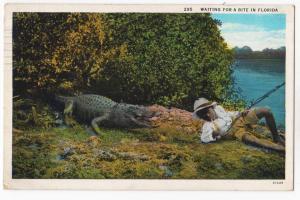 Waiting for a Bite, Alligator & Black-boy