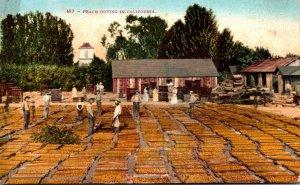 California Peach Drying In California