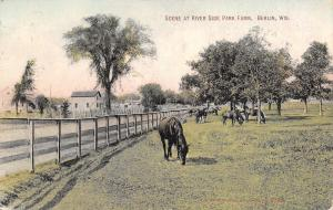 Berlin Wisconsin~River Side Park Farm~Black Horses Graze by Fenceline~Barns~1909
