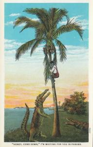 PANAMA, 10-20s; Man in coconut tree, Alligators Honey, Come Down