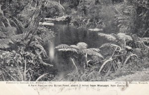 Fern Pool on Buller Road, WESTPORT ,  New Zealand , 00-10s