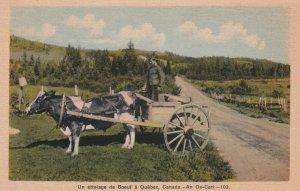 QUEBEC, Canada, 1900-1910's; An Ox Cart