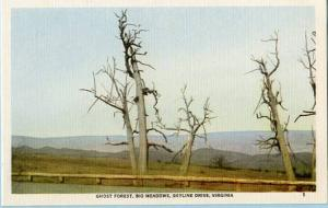 VA - Skyline Drive, Ghost Forest, Big Meadows