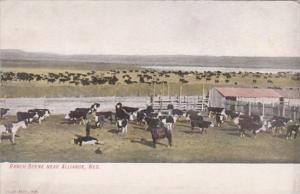 Nebraska Alliance Typical Ranch Scene