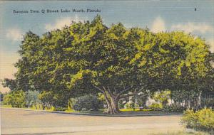 Banyan Tree Q Street Lake Worth Florida 1949
