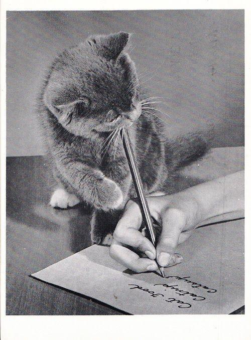 Cat Writing Food Letter For Supermarket Pulling Owners Hand To Write Postcard