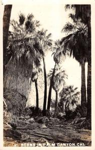 Palm Canyon California Palm Tree Scene Real Photo Antique Postcard K14719