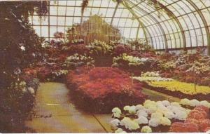 Annual Easter Display Conservatory In Eden Park Cincinnati Ohio 1961