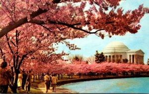 Washington D C Thomas Jefferson Memorial At Cherry Blossom Time