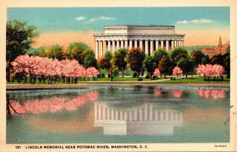 Washington D C Lincoln Memorial and Cherry Blossoms