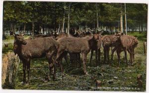 Elk Woodland Park, Seattle