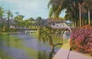 Florida Silver Springs Lucky Palm Tree With Azaleas In Bloom 1956