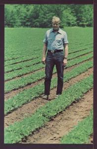 Jimmy Carter Surveys Peanut Fields Post Card 3373