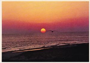 Florida Largo A Florida Sunset