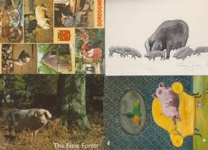 4x Pig Farm Farming Perigord The New Forest Cartoon Postcard s