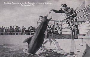 Florida Marineland Feeding Time For 600 Pound Porpoise Curteich