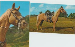 Beautiful Palomino Horses Parade Lot of Two 1950s Chrome