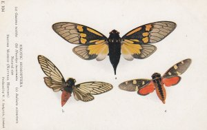 Exotic Homoptera , 00-10s ; #1