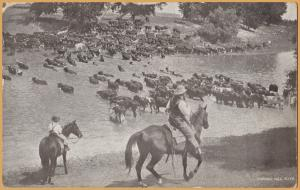 Fording the Milk, in Montana, Cowboys driving cattle across the Milk River 1912