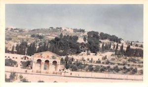 Garden of Gethsemane JerUSA lem Jordan Non Postcard Backing
