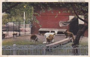 Illinois Chicago Deer In Lincoln Park Zoo 1919