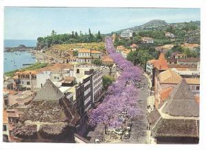 FUNCHAL, Flowering Jacaranda trees in Avenida Arriaga, Madeira, Portugal, 50-70s