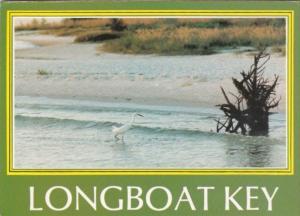 Florida Longboat Key Snowy Egret Wading The Surf