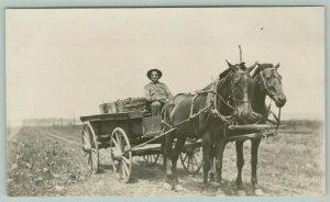 RPPC Closeup: Farmer Hauls Crops From Field to Market~Horse-Drawn Wagon c1910