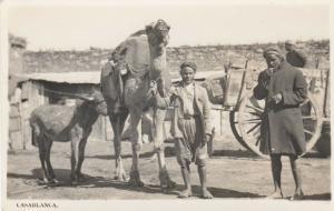 CASABLANCA , Morocco , 10-30s ; Natives & CAMEL & Donkey