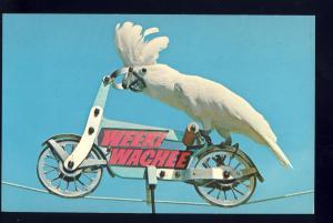Weeki Wachee, Florida/FL Postcard, Cockatoo Duster Rides Bicycle